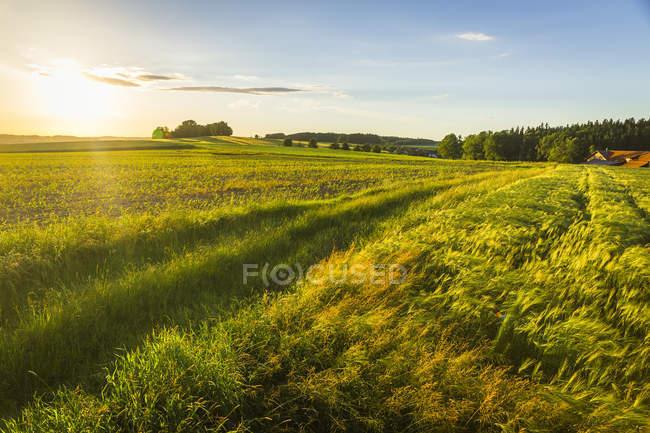 Österreich, Innviertel, Feld beim Sonnenaufgang — Stockfoto