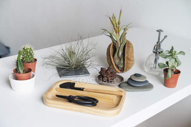 Variation des plantes succulentes et du matériel de jardinage à la maison — Photo de stock