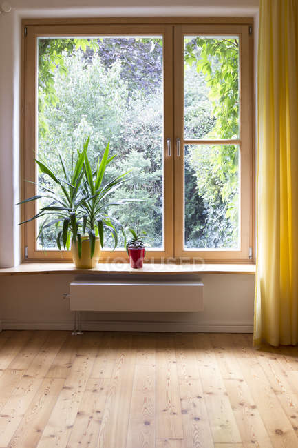 Potted plants at window sill — Stock Photo