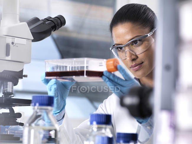 Biomedical Research, female scientist viewing stem cells developing in a culture jar during an experiment in the laboratory — Stock Photo