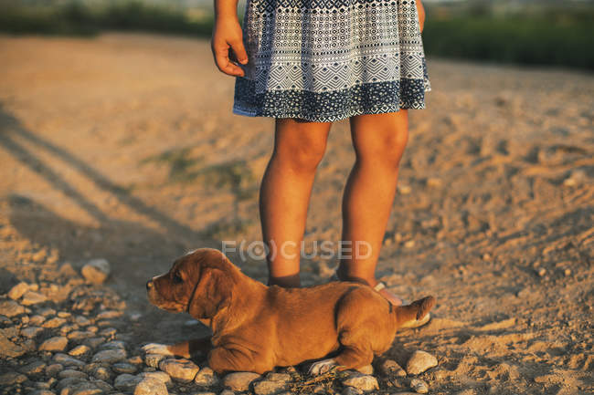 Puppy and partial view of little girl legs at sunset — Stock Photo