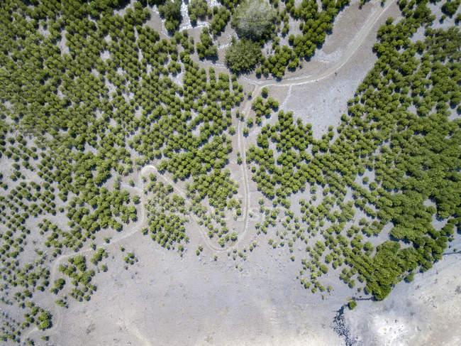 Indonésie, Vue aérienne de Lombok, sentiers et buissons — Photo de stock
