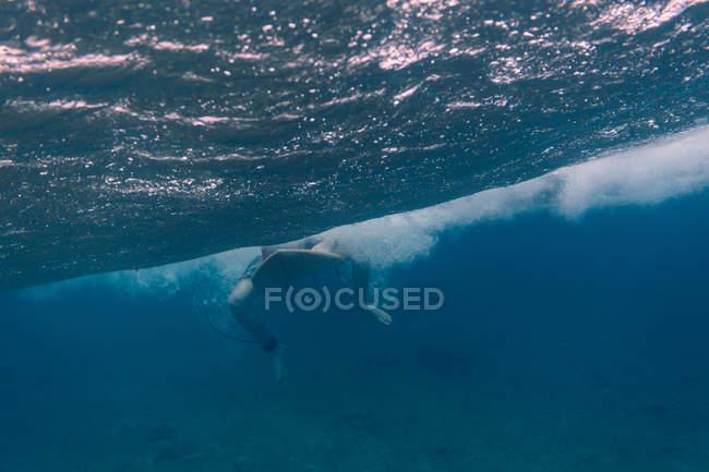 Maledivas, Océano Índico, surfista sentado en la tabla de surf, tiro bajo el agua - foto de stock