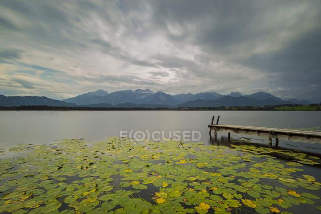 Alemania, Baviera, Allgaeu, Hopfen am See, Hopfensee con muelles y almohadillas de lirio - foto de stock