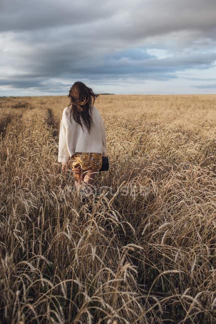 Vista posterior de la joven mujer caminando en el campo de maíz - foto de stock