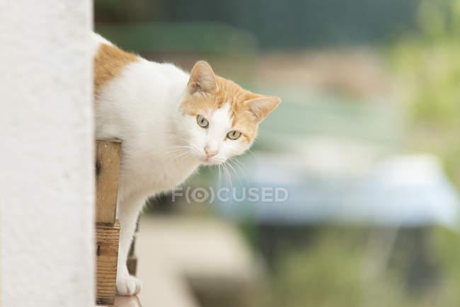 Portrait of cat watching something — Stock Photo
