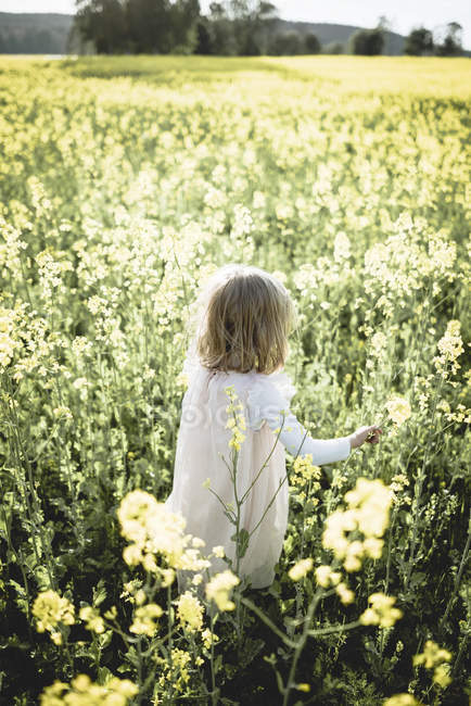 Back view of little girl walking in rape field — Stock Photo