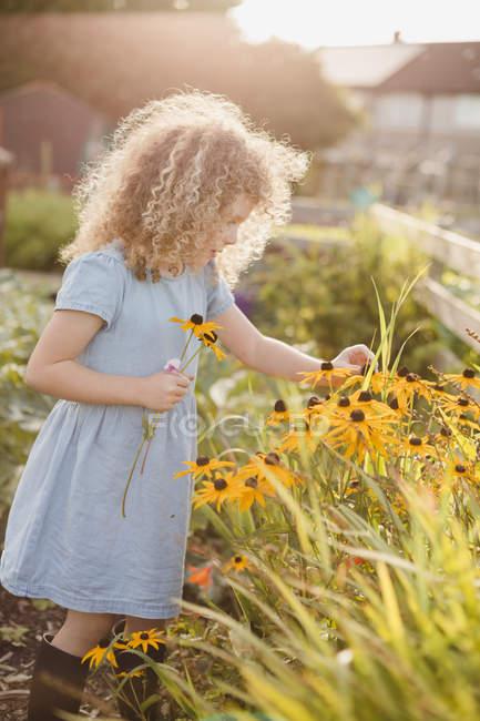 Маленька дівчинка збирає квіти в саду. — стокове фото