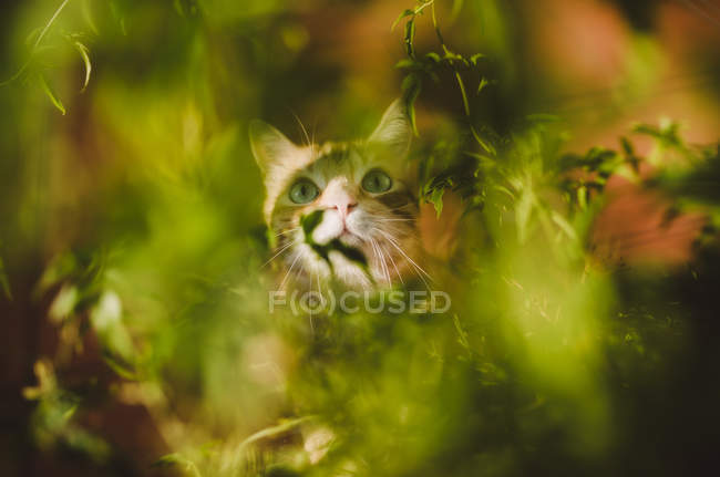 Cat hidden among some plants — Stockfoto