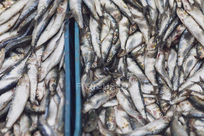 Morocco, Marrakesh, fish for sale at Djemaa el Fna — Stock Photo