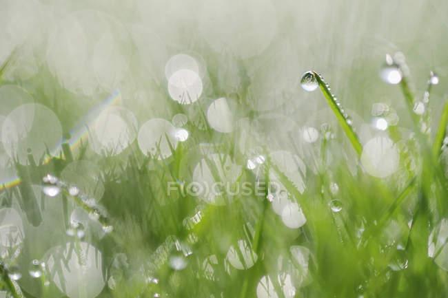 Rosée sur l'orientation sélective d'herbe, fermez vers le haut — Photo de stock