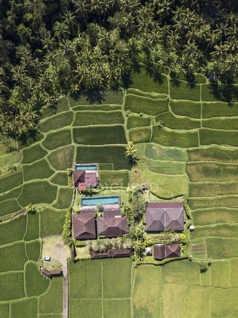 Індонезія, Балі, Убуд, повітряна думка рисових полів — стокове фото