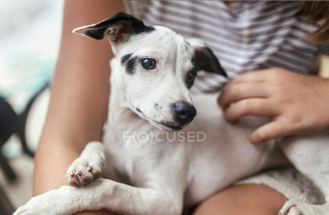 Портрет щенка на коленях у девушки — стоковое фото