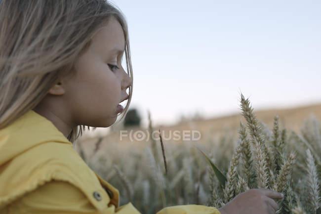 Маленька дівчинка торкається вух жита на полі. — стокове фото