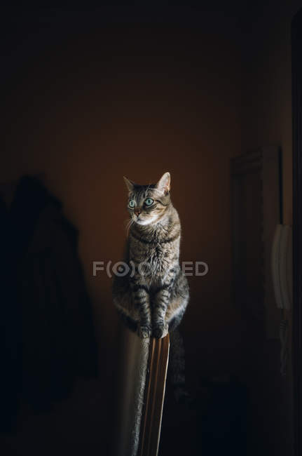 Portrait of a tabby cat sitting on the chair — Stock Photo