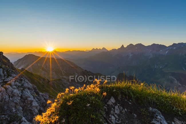 Німеччина, Баварія, Allgaeu, Allgaeu Альпах, Alpine pasque квітка на світанку — стокове фото