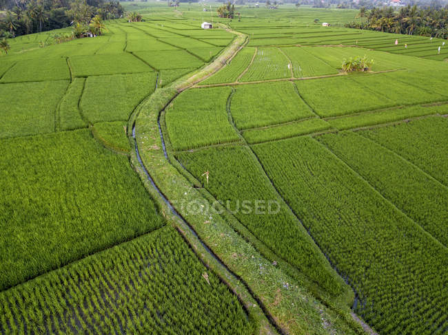 Indonesia, Bali, Aerial view of rice fields — Stock Photo