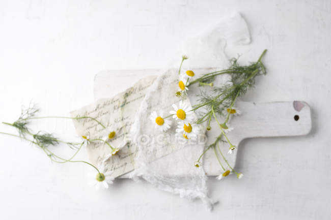 Still life with chamomile flowers — Stock Photo
