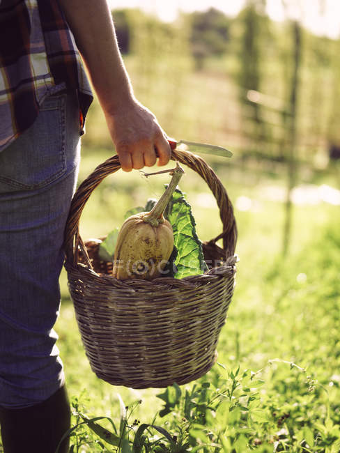 Female hand carrying basket of harvested vegetables — Stock Photo