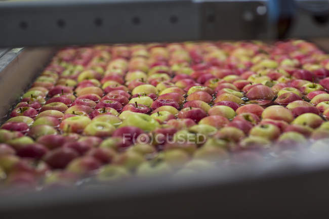 Apple factory, apples in water — Stock Photo