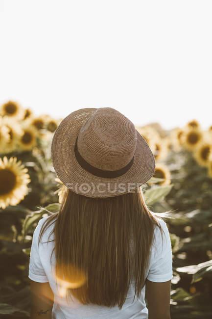 Rückansicht einer jungen Frau mit Hut, die im Sonnenblumenfeld steht — Stockfoto