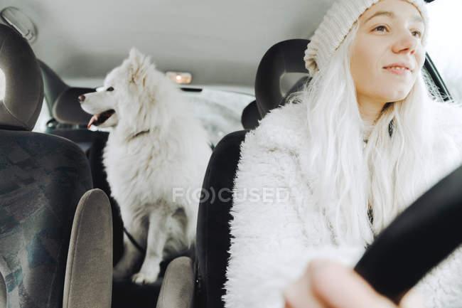 Белая одетая молодая женщина за рулем автомобиля с белой собакой на заднем сидении — стоковое фото