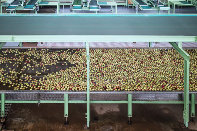 Apples in factory being washed — Stock Photo