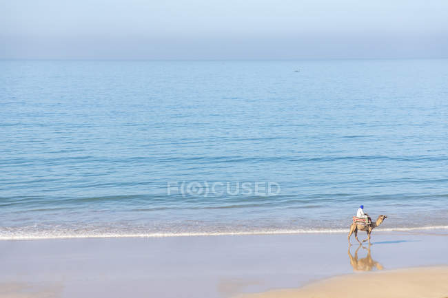 Morocco, Man on camel at the beach — Stock Photo