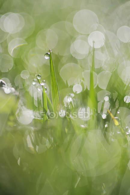 Дрожь на траве, крупный план — стоковое фото