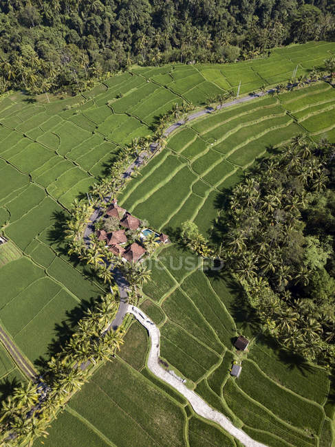 Indonesia, Bali, Ubud, Aerial view of rice fields — Stock Photo