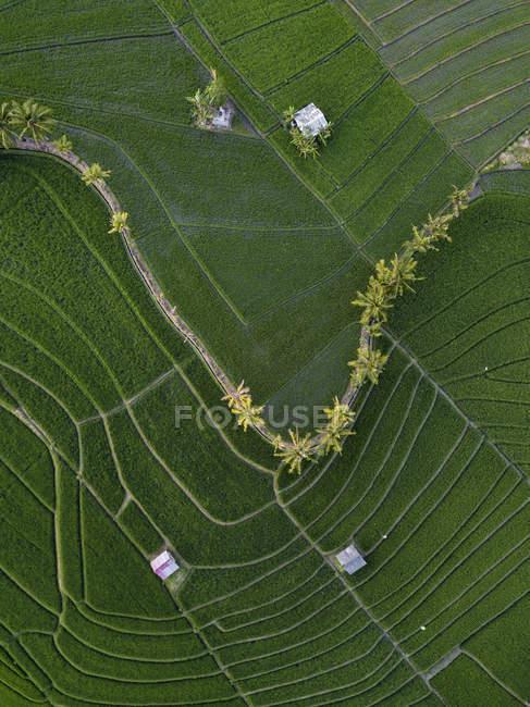 Indonesia, Bali, Veduta aerea delle risaie — Foto stock