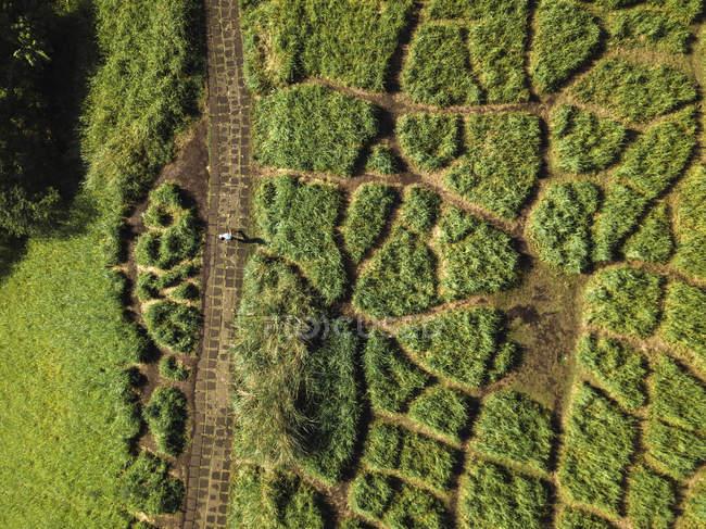 Indonesia, Bali, Ubud, Veduta aerea del sentiero in collina — Foto stock