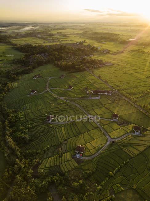 Indonesia, Bali, Kedungu, Veduta aerea delle risaie — Foto stock