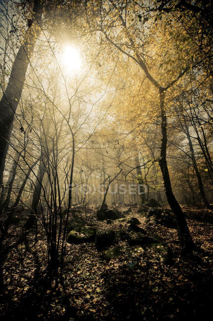Italy, Piedmont, forest in sunlight — Stock Photo