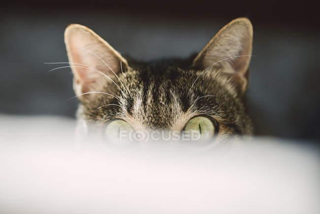 Portrait of peeking cat with green eyes — Stock Photo