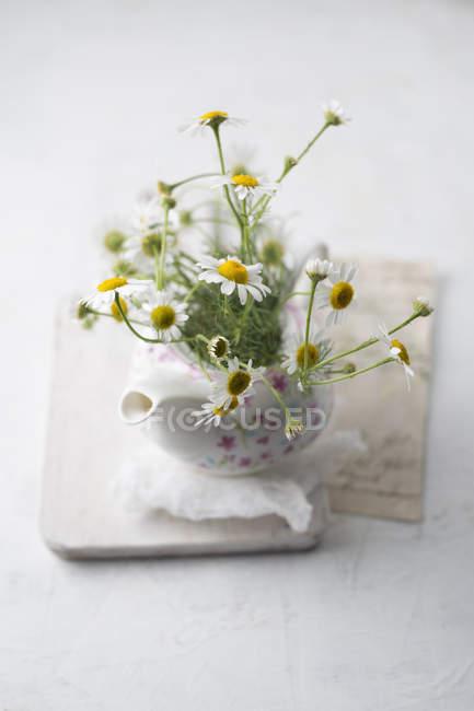 Flores de camomila em um pote de chá — Fotografia de Stock