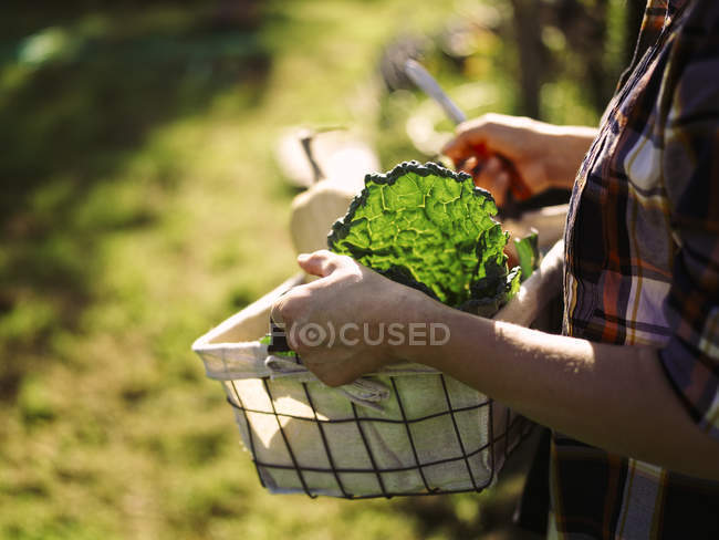 Female hands carrying basket of harvested vegetables — Stock Photo