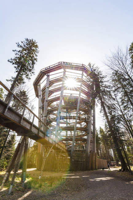 Germany, Bad Wildbad, Black Forest, Canopy Walk Black Forest against the sun — Stock Photo