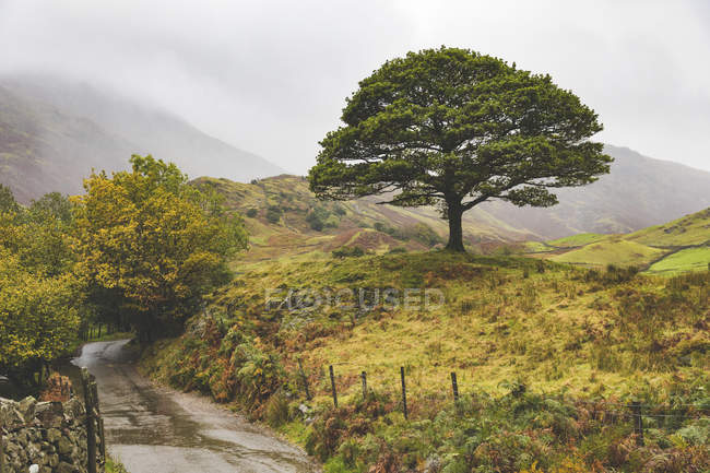 United Kingdom, England, Cumbria, Lake District,  lone tree in the countryside — Stock Photo