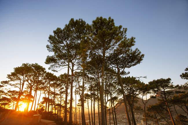 África, África do Sul, Cidade do Cabo, Árvores em uma colina com pôr do sol — Fotografia de Stock