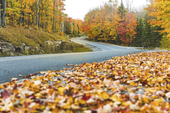 Canada, Ontario, main road through colorful trees in the Algonquin park area — Stock Photo