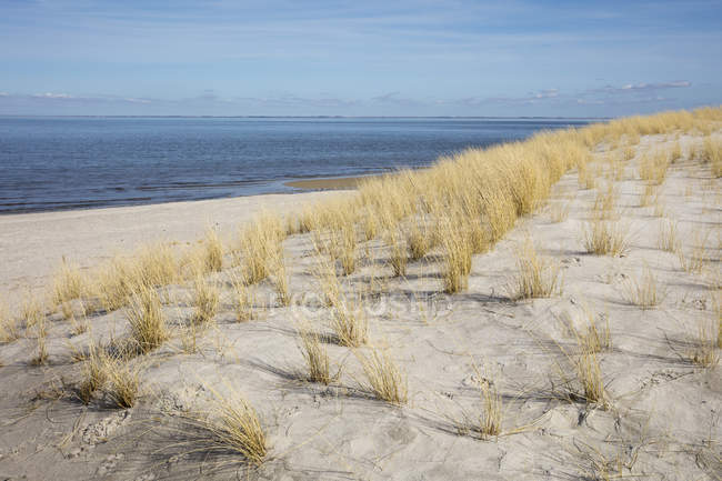 Germany, Schleswig-Holstein, North Frisian Islands, Sylt, List, dune and marram grass — Stock Photo