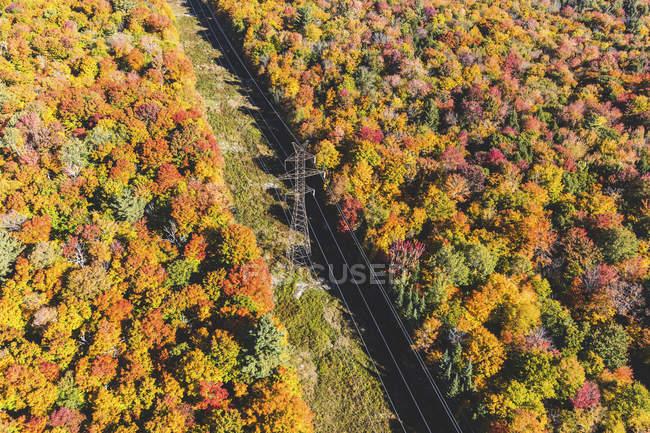 Канада, Онтарио, электрические пилоны и провода через деревья в парке Алгонкин, вид с воздуха — стоковое фото