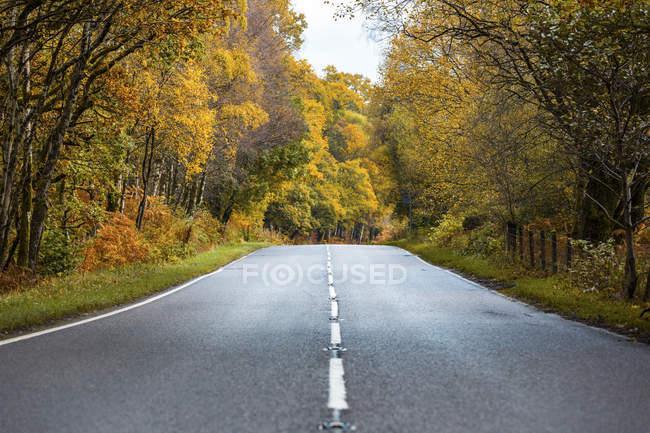 Reino Unido, Scotland, estrada nas terras altas que passam através das árvores alaranjadas e amarelas — Fotografia de Stock