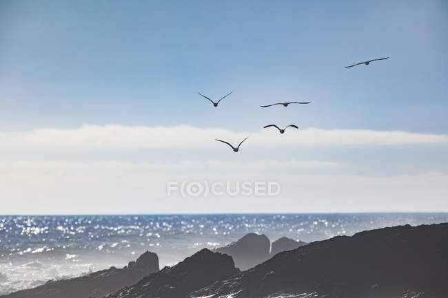 Africa, South Africa, Cape Town, Flock of birds flying over the sea and rocks — стоковое фото
