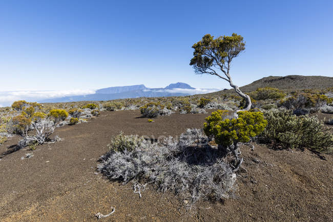 Reunion National Park, Piton de la Fournaise, Route du volcan, Plaine des Sables — стокове фото