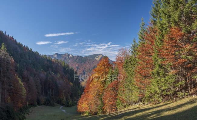 Germania, Alta Baviera, Aschau, foresta in autunno — Foto stock