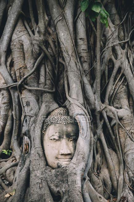 Thailand, Ayutthaya, Buddha head in between tree roots at Wat Mahathat — Stock Photo