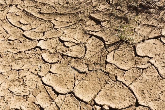 USA, Arizona, Buckskin Gulch, dry cracked earth — Stock Photo