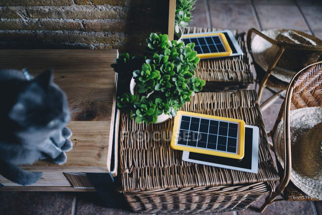 Russian blue cat next to a solar panel charger, tablet and plant — Stock Photo